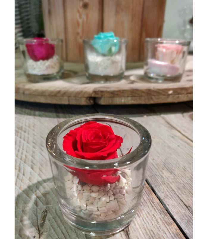 Petite rose éternelle