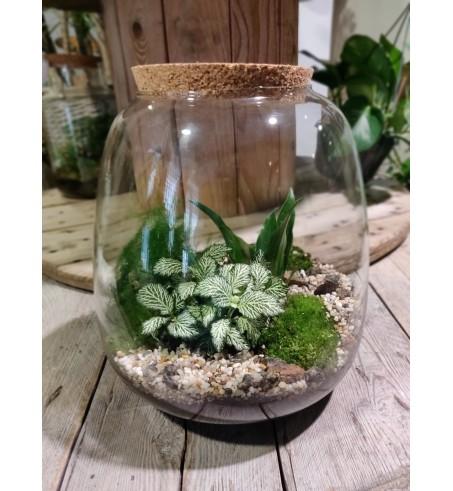Grand Terrarium Ovale bouchon liège avec 3 plantes