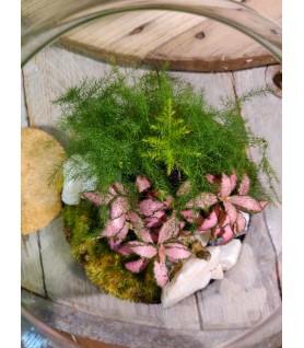 Terrarium bouchon liège avec 2 plantes